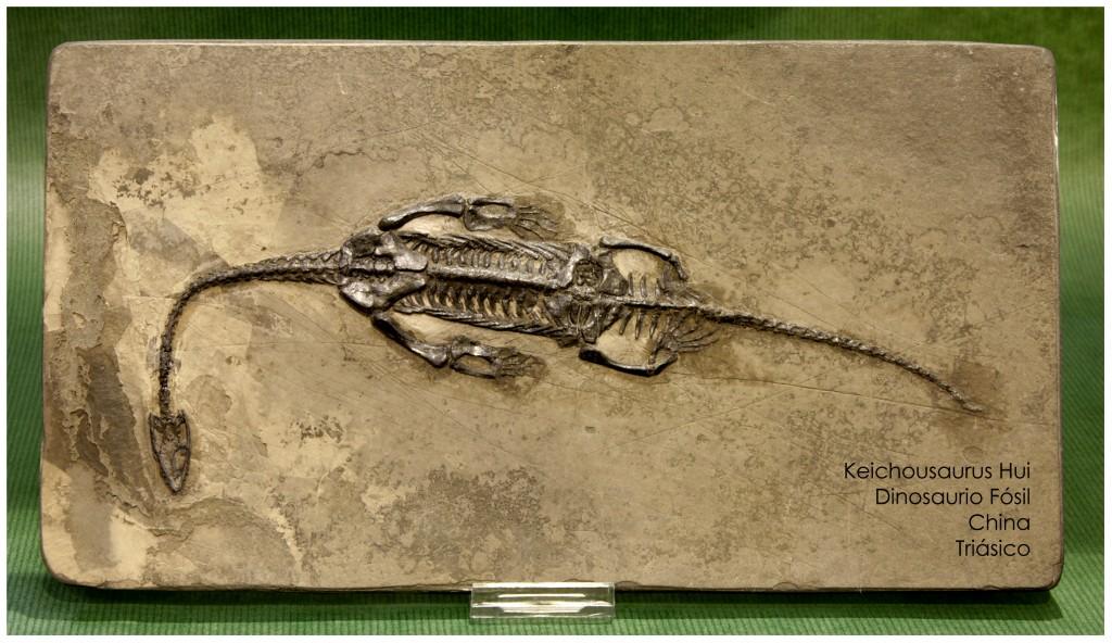 dinosaurio fosil asico