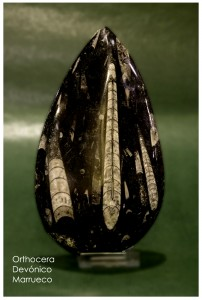 Ortocera devonico marruecos